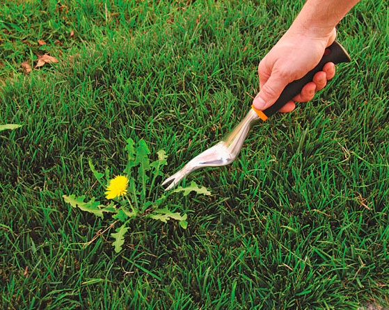 Weed the first warm weekend st louis lawn care company for Weeds garden maintenance